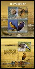 2018 Gambia, birds Hamerkop, S/sheet + sheet, MNH