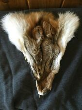Professionally Tanned Coyote Face - Hide - Fur