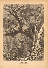 Leopard, Stalking Deer, Vintage 1882 German Antique Art Print