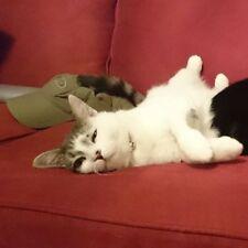 Test Item: Transformers Elita-1 Cat plush cat sofa two test version