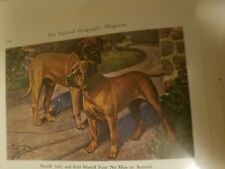 E H Miner Mastiff & Bullmastiff Bookplate from 1941 National Geographic Magazine