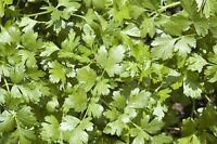 Arugula (Eruca Sativa)- 100 seeds