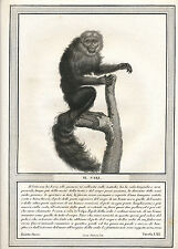 1822 Jacobs stipple engraving monkey P Hugues Natural History of Primates Italy