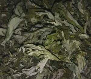 Organic Mugwort Dried Leaves - Artemisia argyi - Wicca Apothecary Smoke Herb