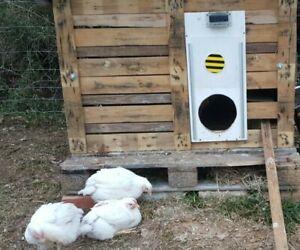 Putkovar automatic chicken solar coop door - NO doors, NO battery