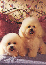 BICHON FRISE CHARMING DOG GREETINGS NOTE CARD TWO BEAUTIFUL DOGS SIT ON BED