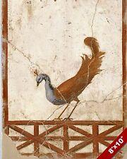 ANCIENT ROMAN PEACOCK BIRD FRESCO ROME PAINTING HISTORY ART REAL CANVAS PRINT