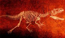 "Skeleton Bone Fossil Collection - Allosaurus - 14"" x 24"" Canvas Art Poster"
