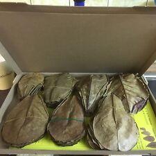 ☺☝~100 Stück (100 Gramm) 10-15cm Seemandelbaumblätter Catappa Leaves TopQualität