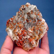 SPECTACULAR LARGE TOP COLLECTORS FIRE RED VANADINITE CRYSTALS ON BARITE