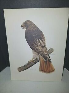 "1976 James C. Mitchell Red Tail Hawk 8 1/2"" x 10 3/4"" print"