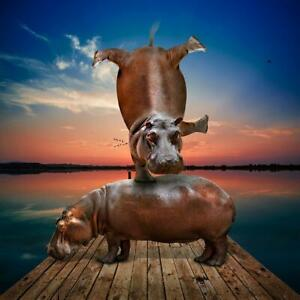 GILLIE AND MARC. Direct from artists. Authentic photo art print hippo balance