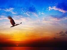 BIRD PREY BRAHMINY KITE FLYING SUNSET SKY PHOTO ART PRINT POSTER BMP2154B