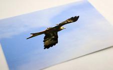 Welsh Red Kite, british birds unique blank postcards/mini prints