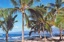 4 HAWAIIAN SPROUTING COCONUT TREE PLANTS ~ GROW HAWAII