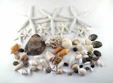 Sea Shell Lot Nautical Crafts Star Fish