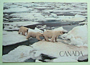 Large Postcard - CANADA - POLAR BEAR FAMILY - 1988 - (LG8-10)