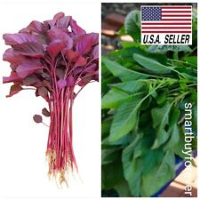 2000++ Seeds Red and Green Spinach Amaranth Seeds Asian Vegetable Heirloom