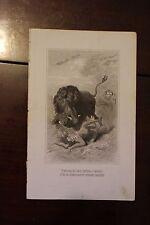 ✒ 1882 Gravure Trappeur chez les ORICARAS Indiens Amérique