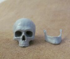 1:6 scale Custom made Resin  anatomical Skull Accessory for 12in. figures