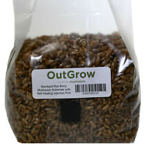 Sterilized Rye Berry Mushroom Substrate With Self Healing Injection Port