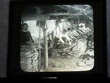 VINTAGE COLLECTIBLE GLASS PICTURE NEGATIVE Scraping Oak Bark Almoraima Spain