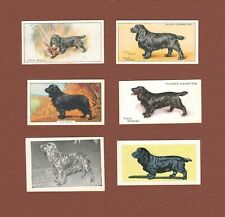 Field Spaniel dog trade cards set of 6