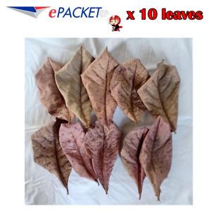 10pcs Catappa Tropical Indian Almond Dry Leaves for Shrimp Fish Bettas Aquariums