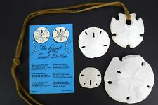 4 Vintage Sand Dollars and Postcard