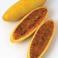 "1x Banana Passionfruit ( Passiflora mollissima ) fruit vine - 3"" pot"