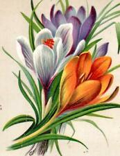 1885 WEST BROOKFIELD MA*COOLIDGE*MILLINERY OPENING*CROCUS*VICTORIAN TRADE CARD