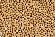 Green Manure : 3Kg White Mustard Seed