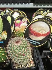 Chalk Cactus & Succulent Plants