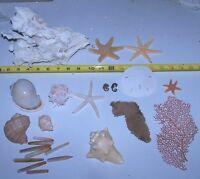 Mixed Rare Starfish, Coral, Dried Sea life Shells Craft collector Decor Lot 26-L
