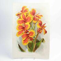 Canna Koenigin Charlotte botanical print antique colour lithograph flower floral
