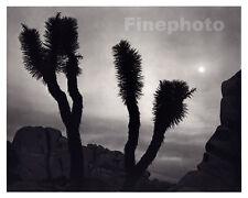 1949 Vintage Print JOSHUA TREE California Landscape Photo Engraving, ANSEL ADAMS