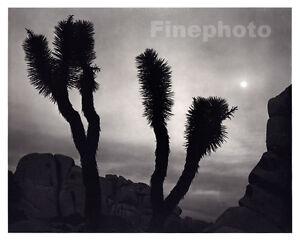 1949 Vintage ANSEL ADAMS Joshua Tree Moon California Landscape Photo Engraving