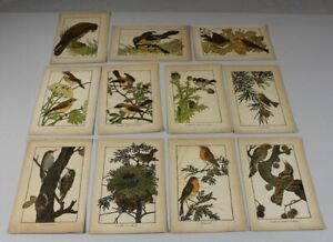 A8/11 Picture Boards - Color Litho - Various Bird Representations Fun 19.