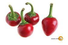 20 Satana KISS Chilli CHILI PEPPER SUPER HOT!!! poca frutta 20 semi freschi