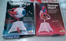 Vintage 1987 lindberge human eye and heart model kits.
