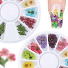 Real Dry Dried Flower Leaves 3d UV GEL Acrylic False Tips Nail Art 12 Colors