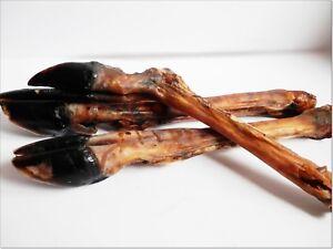 Very Large Dried DEER Leg Hoove Grade A - chews treats snacks 100% NATURAL