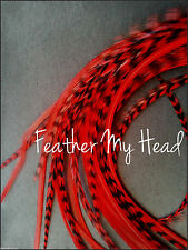 "Feather Hair Extension,  Whiting Eurohackle, Red, Super Long 11""- 14"""