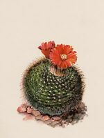 Antique Cactus Print Vintage Botanical Print Red Flowered Cactus Art  #2989