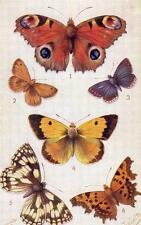 Butterflies on the Wing (C) Series 2 Tuck Oilette 3390 Wealthy push out pc