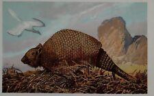 c1900 TEDESCA STAMPA PANOCHTHUS PREISTORICO DINOSAURO ANIMALE Animali der Urwelt