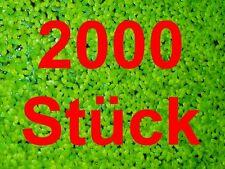 *WASSERLINSEN* 2000 Lemna Schwimmpflanze Algenkiller Teich Balkonteich Miniteich
