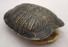 Real Turtle Shell - 4 - 5 inch Long - Red Eared Slider - Carapace Taxidermy