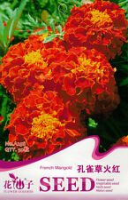 1 Pack 50 Red Peacock Grass Seed Marigold Tagetes Patula Garden Flowers A258