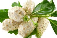 ! Noni ! diese Frucht ist weltweit bekannt für ihre besonderen Heilkräfte !